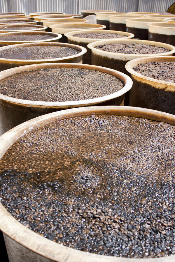 Barrel of soy bean royalty free stock images