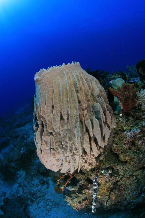 Sea Sponge Stock Image Image Of Coral Detail Bitung