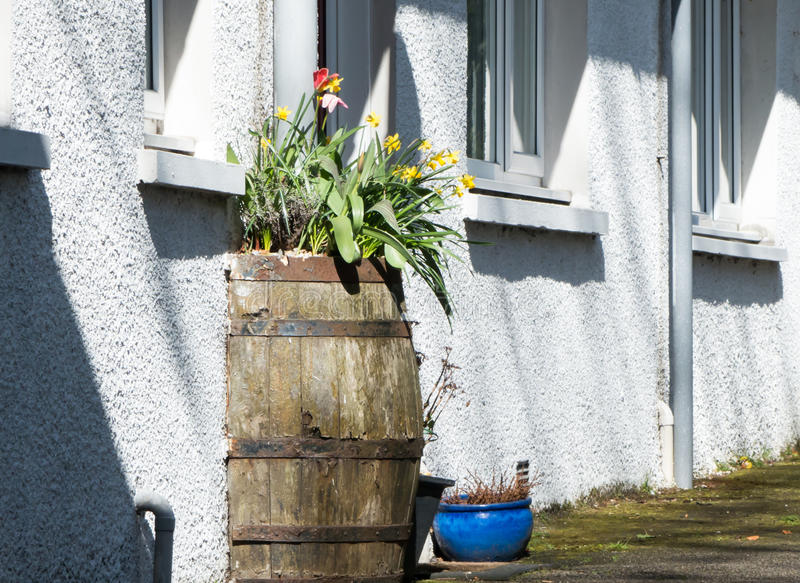 Barrel in the wall royalty free stock photo