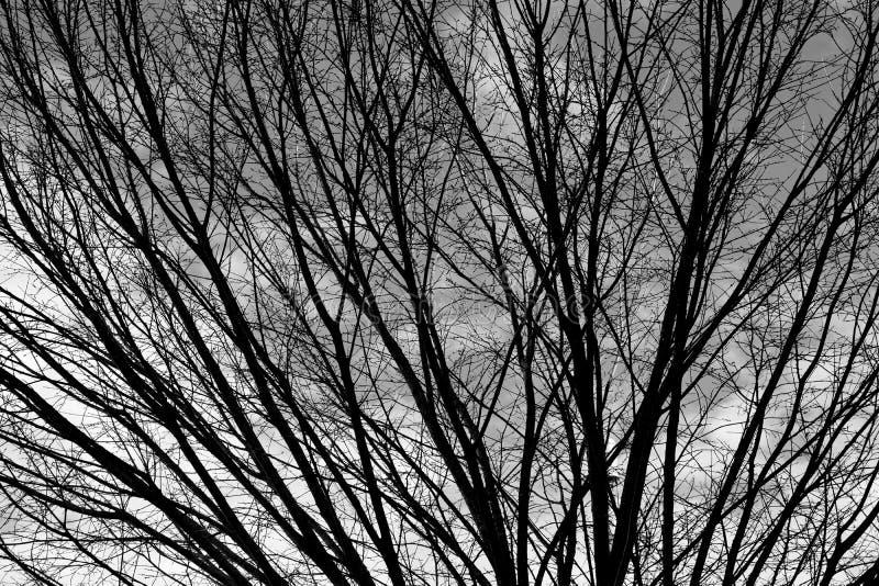 Barren-boom op winterseizoen achtergrond stock foto's