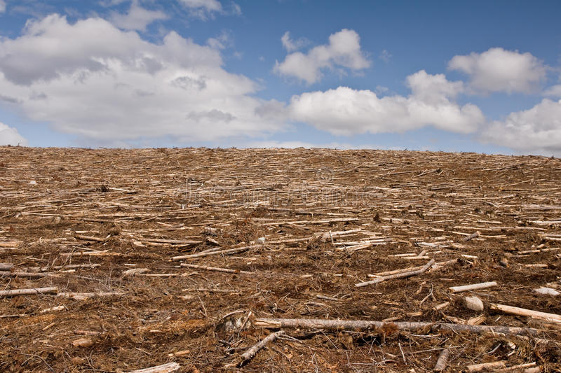 Barren clearcut. A completely clearcut forest with scattered debris stock photography