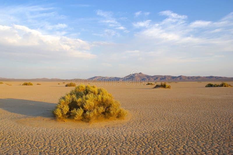 Barren Mojave Desert. Wild open wilderness of the Mojave desert in southern California royalty free stock photo
