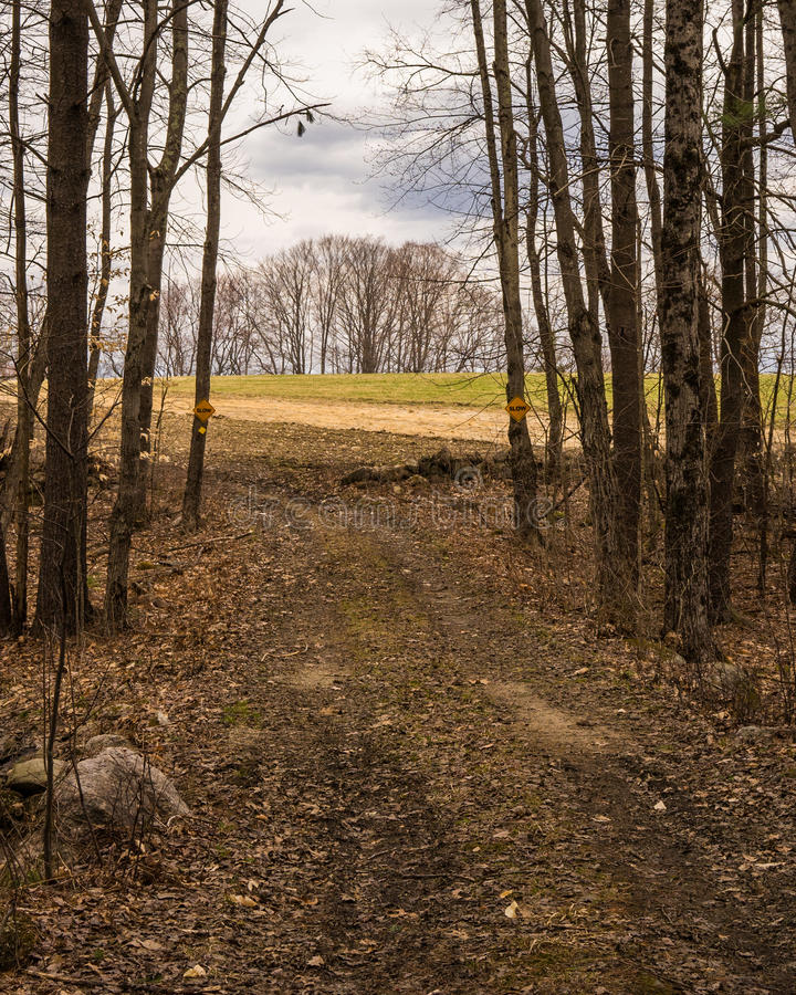 Barren stand of trees seen from trail emerging from the woods in fall. royalty free stock photography