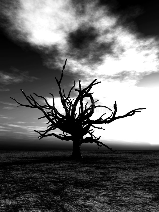 Free Barren Tree 24 Royalty Free Stock Images - 4252199