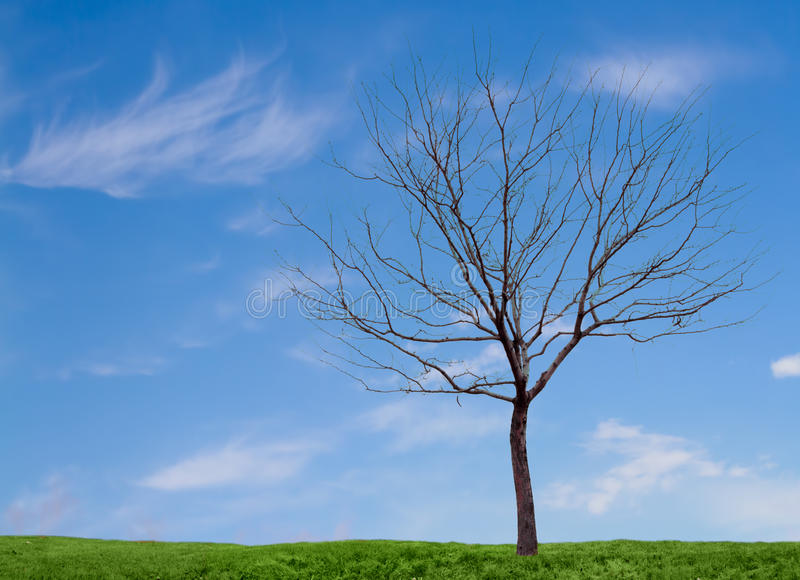 A barren tree with a blue sky and grass