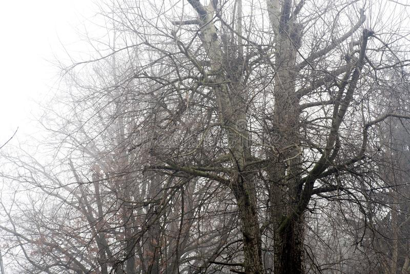 Barren tree branches against sky on foggy morning stock image