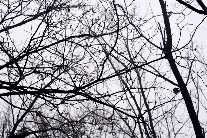 Barren tree branches against sky on foggy morning stock photo