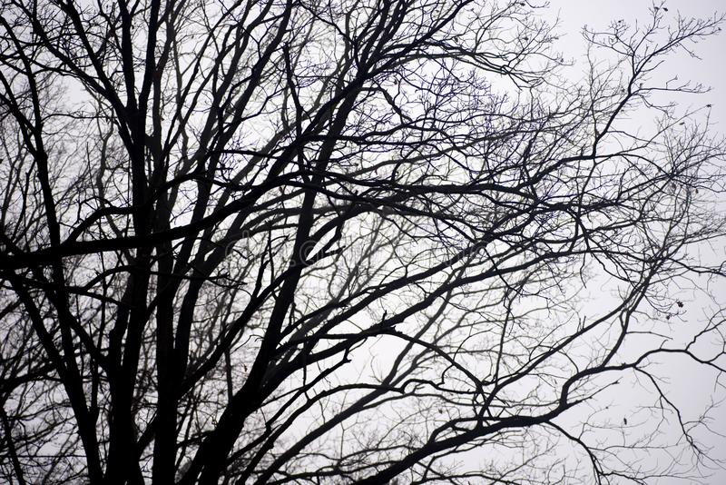 Barren tree branches against sky on foggy morning royalty free stock images