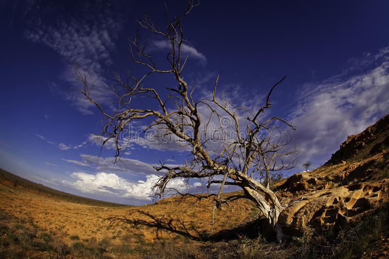 Barren tree in desert royalty free stock photography