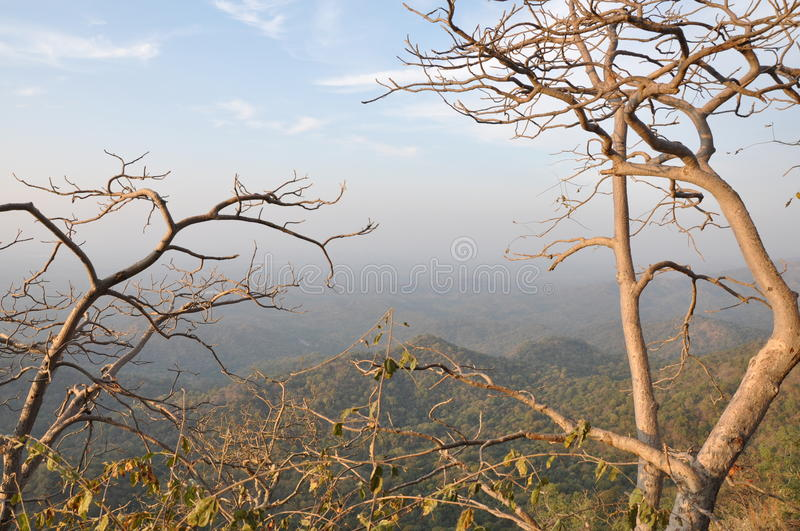 Barren trees on mountain stock images