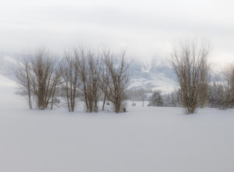 Barren Winter Trees in Snow royalty free stock photography