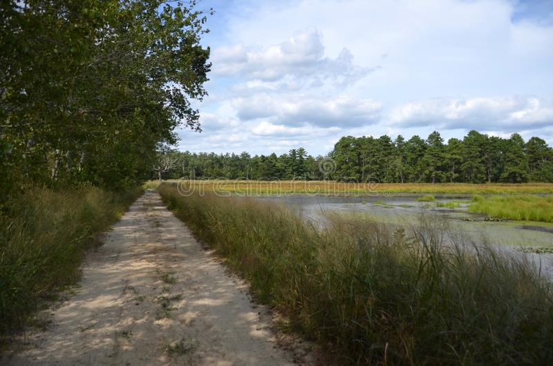 barrens δρόμος πεύκων στοκ εικόνα