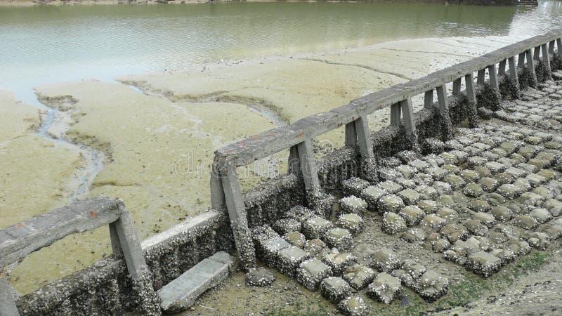 Barrera De La Erosión Con Marea Baja Foto de archivo