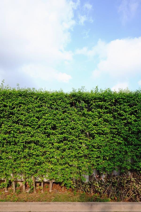 Barrière avec la rangée du petit arbre photo libre de droits
