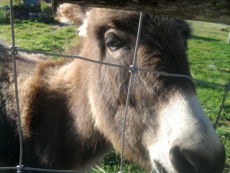barrière d'âne photos libres de droits