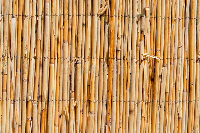 Barrière d'acacia photos stock