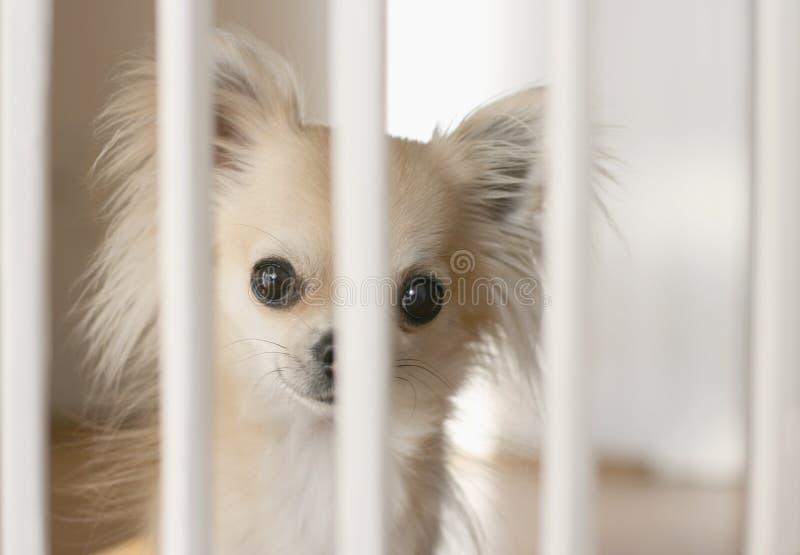 Barrière de chien à l'intérieur image libre de droits
