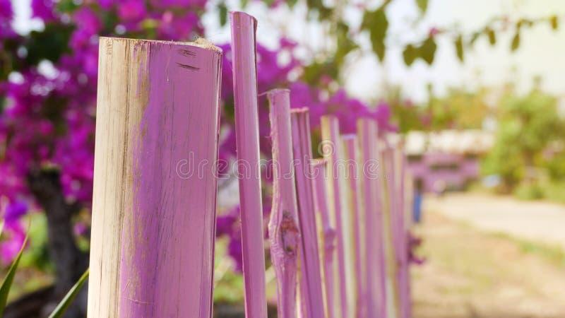 Barrière en bambou rose image stock