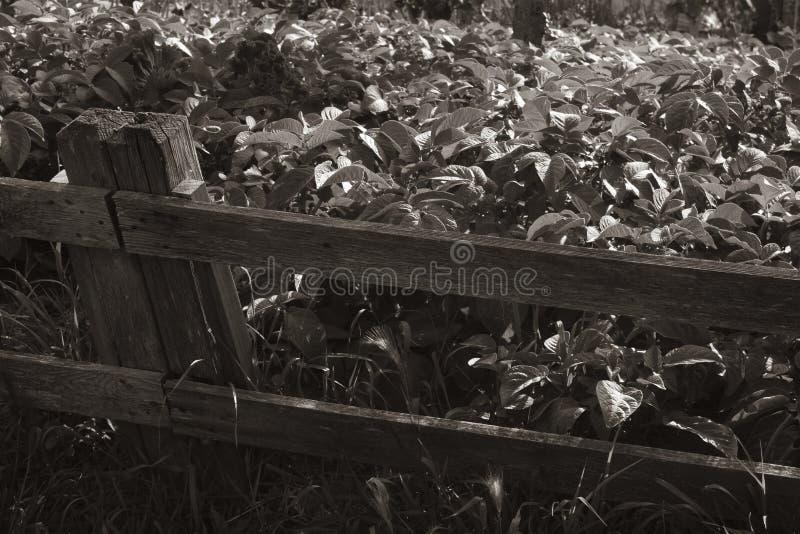 Barrière en bois avec le jardin images stock