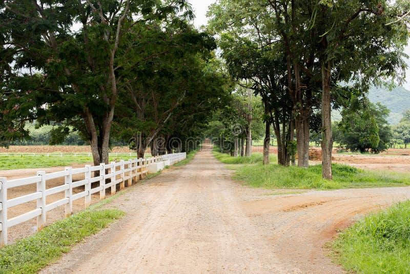 Barrière en bois blanche autour de la route de ranch et de campagne avec l'arbre image libre de droits