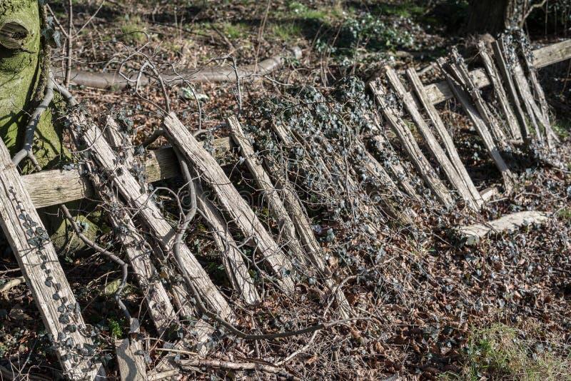 Barrière en bois envahie image stock