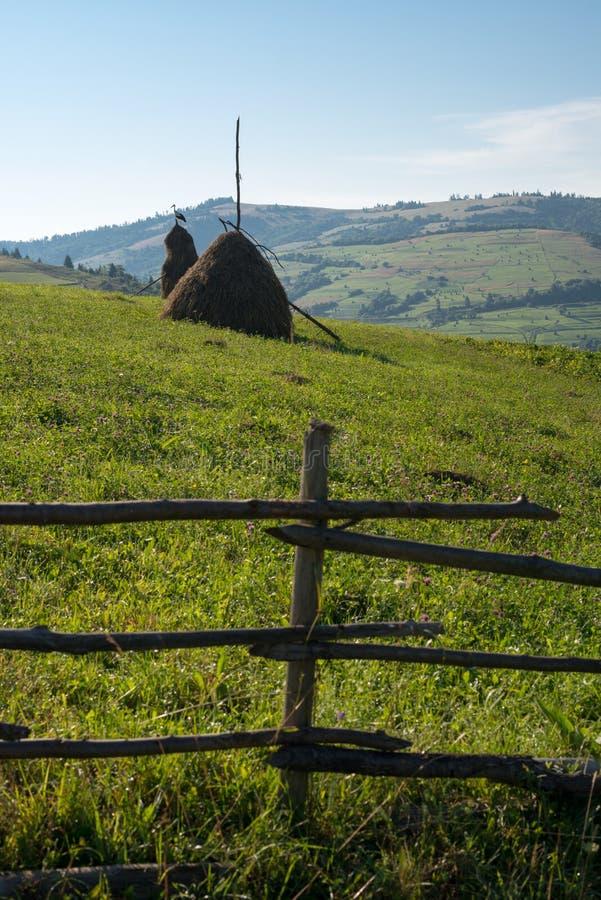 Barrière en bois, meules de foin et cigogne blanche dans le Carpath ukrainien photos libres de droits