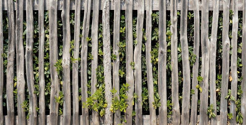 Barrière en bois rustique photographie stock libre de droits