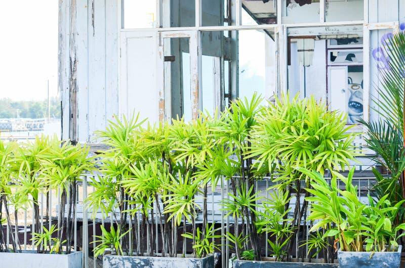 Barrière fraîche d'arbre distincte le parc et le style abandonné de cru photos libres de droits
