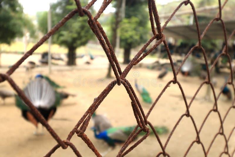 Barrière nette en acier rouillée de grillage photo libre de droits
