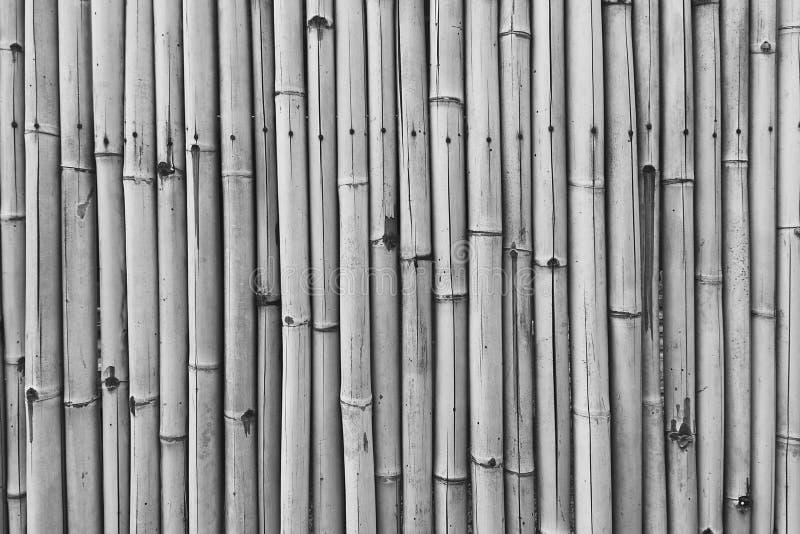Barrière protectrice des bâtons secs d'un bambou de couleur de sépia pour le fond texturisé abstrait images stock