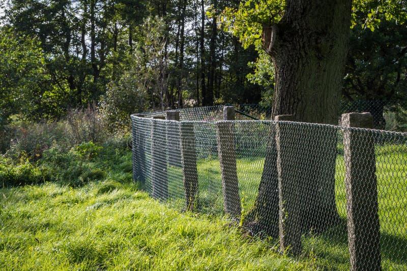 Barrière verte de gril en métal avec l'arbre et l'herbe photos libres de droits