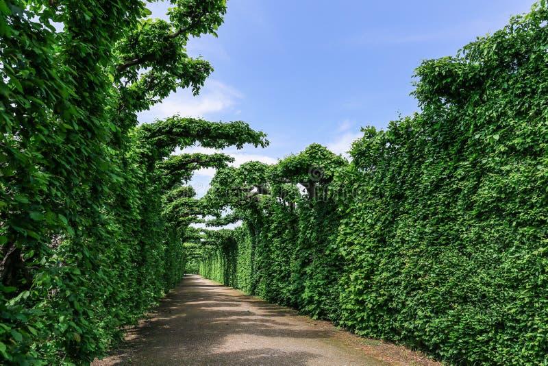 Barrière vivante des jardins dans le palais de Schonbrunn au printemps image stock