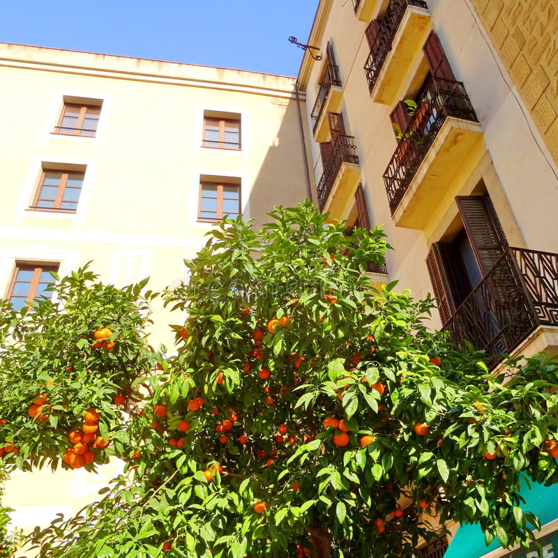 Barri Gothic Quarter and tangerines, Catalonia, Spain royalty free stock photography