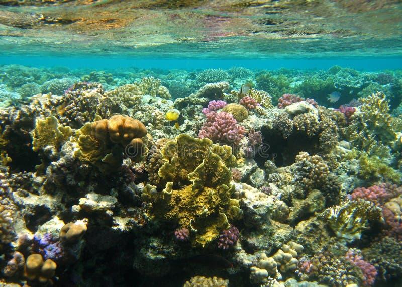 Barriera corallina - alam di marsa fotografia stock
