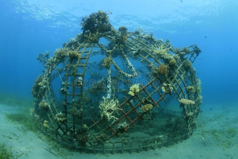 Barriera corallina artificiale immagini stock libere da diritti