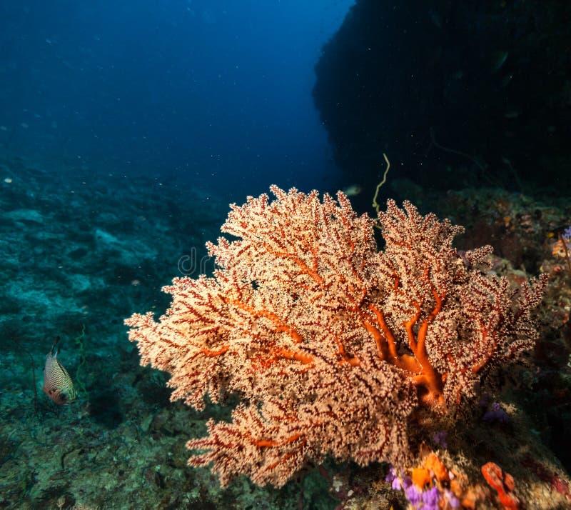 Barriera corallina con il dettaglio dei coralli molli immagine stock libera da diritti