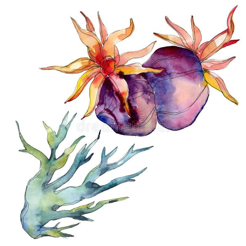 Barriera corallina della natura subacquea acquatica variopinta Il mare della pianta tropicale ha isolato Insieme dell'illustrazio illustrazione di stock