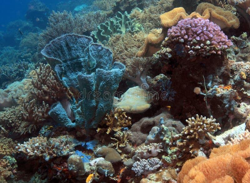 Barriera corallina di Iindonesian fotografia stock