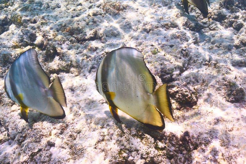 Download Barriera corallina e pesce fotografia stock. Immagine di diving - 55351490