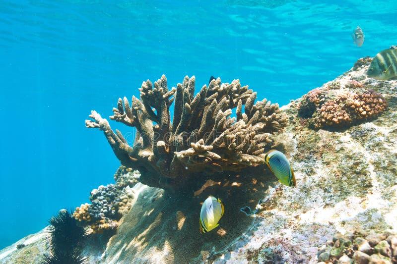 Download Barriera corallina e pesce immagine stock. Immagine di deep - 55351507