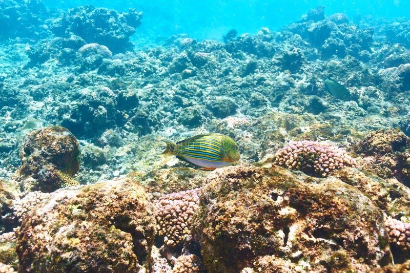 Download Barriera corallina e pesce fotografia stock. Immagine di duro - 55351510