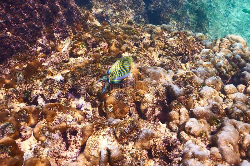 Download Barriera corallina e pesce immagine stock. Immagine di wildlife - 55351517