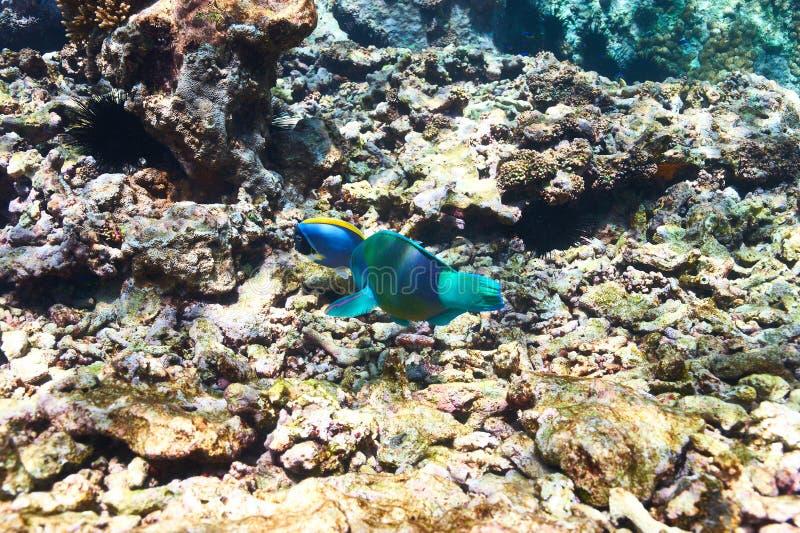 Download Barriera corallina e pesce fotografia stock. Immagine di nave - 55351522