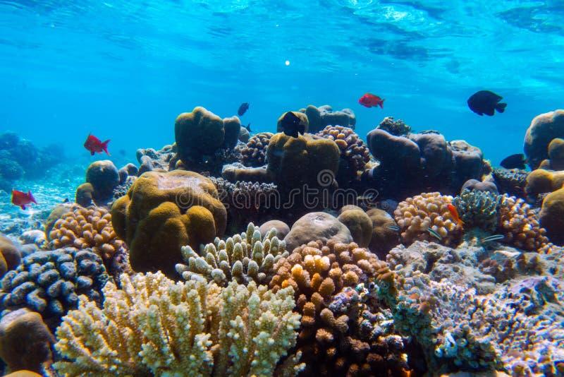 Barriera corallina e pesce subacquei in Oceano Indiano, Maldive fotografie stock