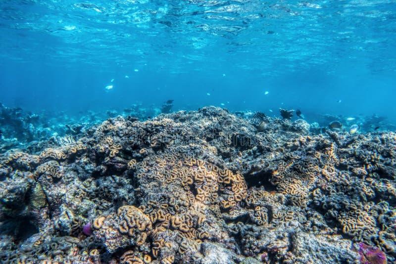 Barriera corallina e pesce subacquei in Oceano Indiano, Maldive immagine stock