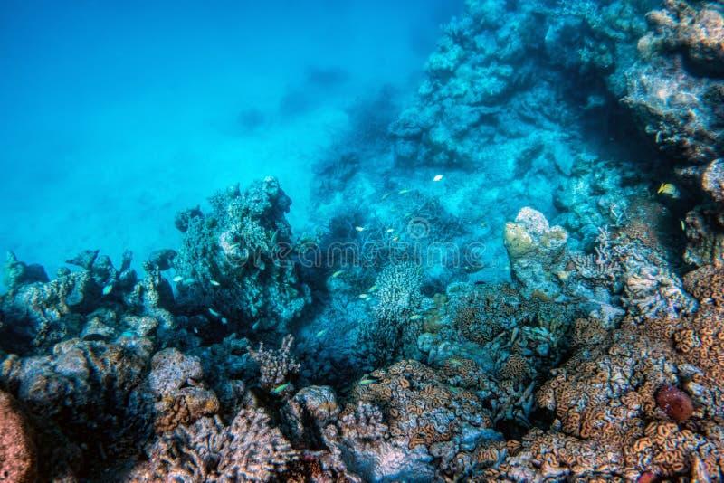 Barriera corallina e pesce subacquei in Oceano Indiano, Maldive immagini stock libere da diritti
