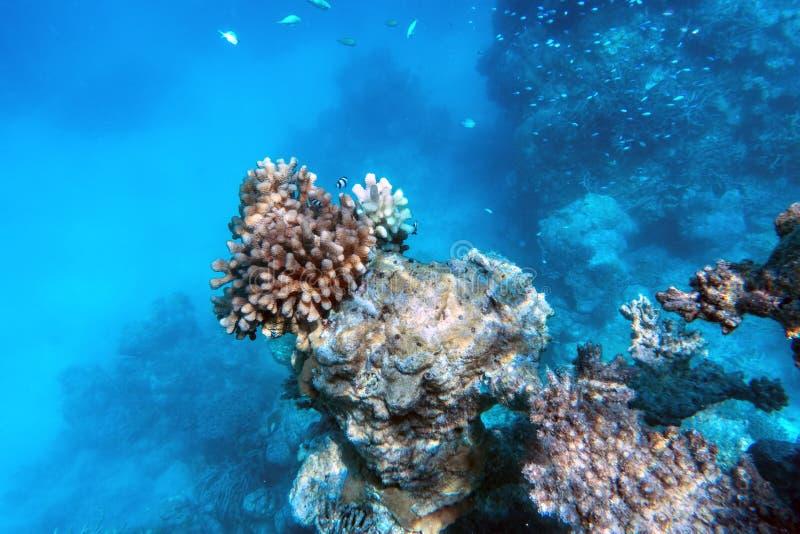 Barriera corallina e pesce subacquei in Oceano Indiano, Maldive fotografia stock