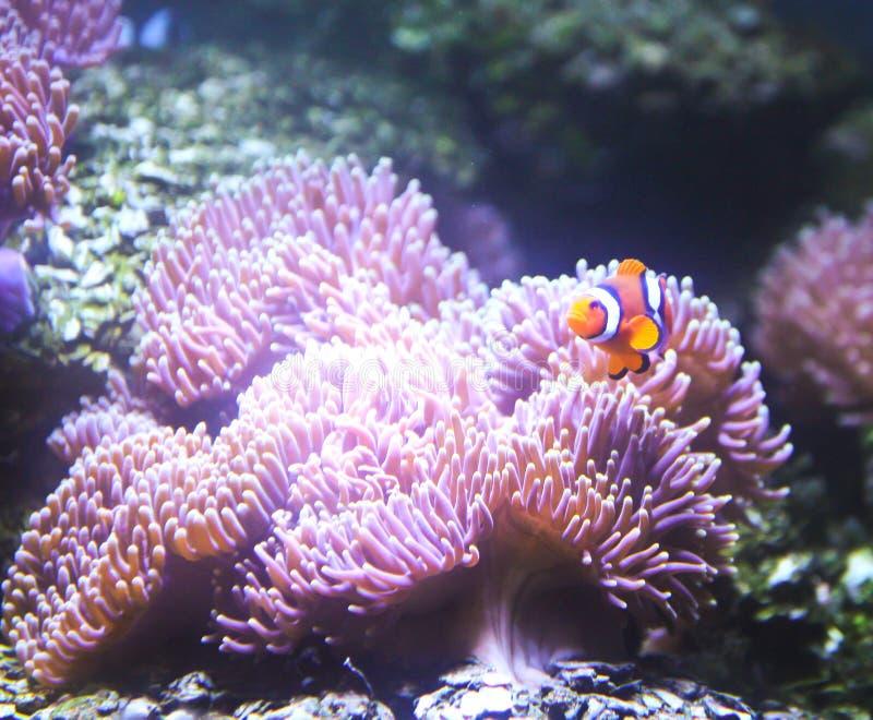 Barriera corallina e pesci tropicali in acquario for Pesci tropicali acquario