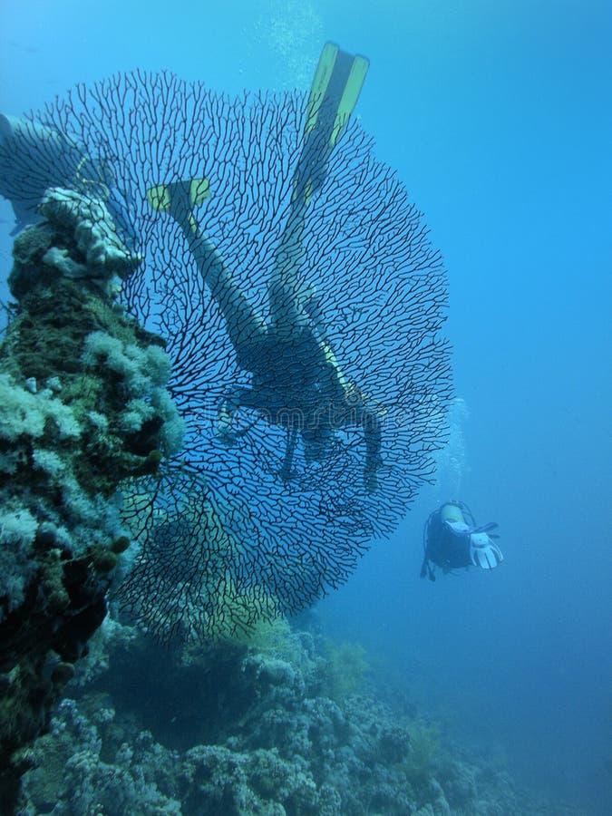 Barriera corallina ed operatori subacquei di scuba fotografia stock libera da diritti
