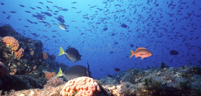 Barriera corallina messicana fotografia stock libera da diritti